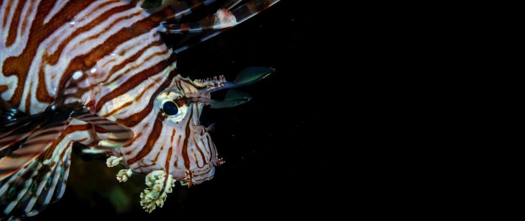Lionfish Central Lionfish Derby Banner