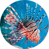 Lionfish Central FAQs about Lionfish