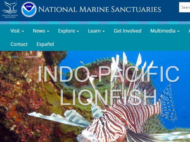 National Marine Sanctuary Foundation Lionfish News
