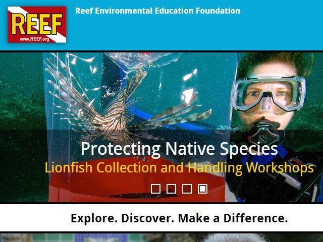REEF Lionfish News