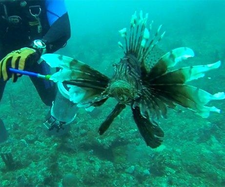 Lionfish Hunting Hero